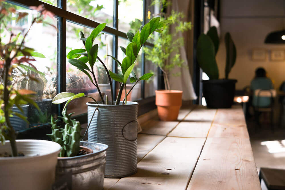 The Health Benefits of Plants in Your Home