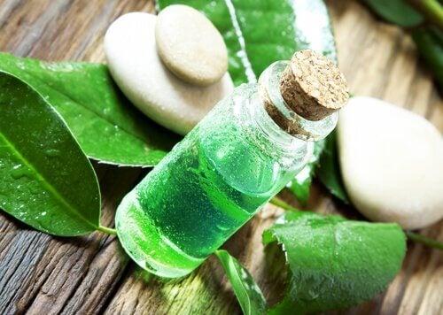 Tea Tree Oil for Fleas and Ticks