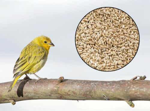 Birdseed and Cinnamon to Lower Your Blood Pressure