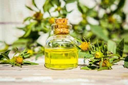 Tea Tree Oil Against Fleas and Ticks