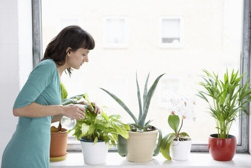 Woman checking plants for plagues.