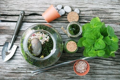 You can make a terrarium from recycled glass bottles.
