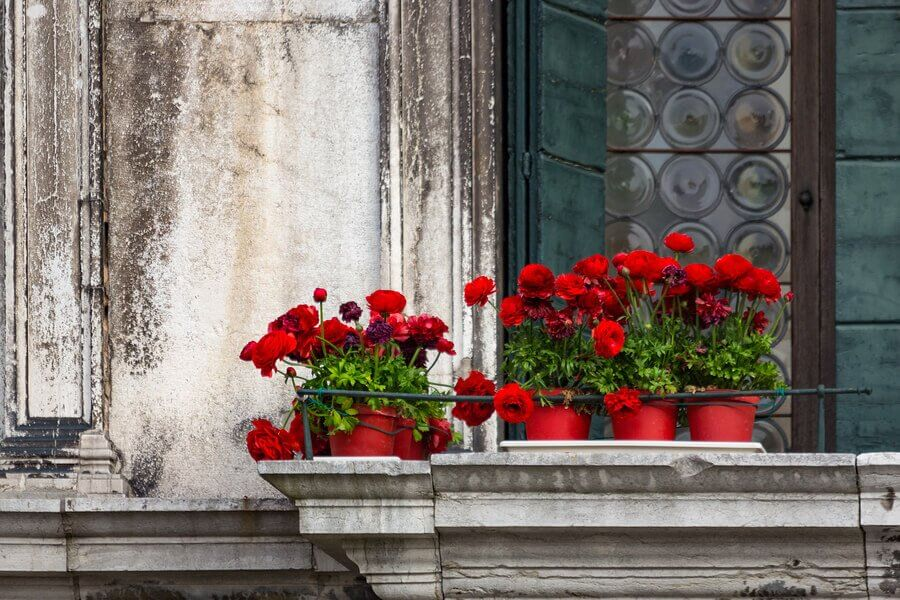 Five Types of Flowers for the Balcony