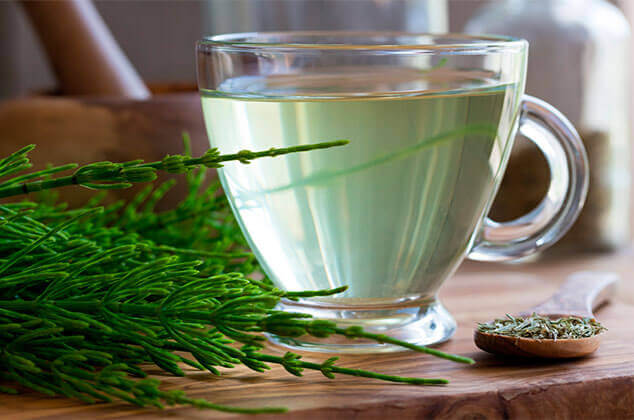 A cup of horsetail tea with the herb.
