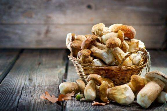 The Top Five Medicinal Mushrooms Backed by Science