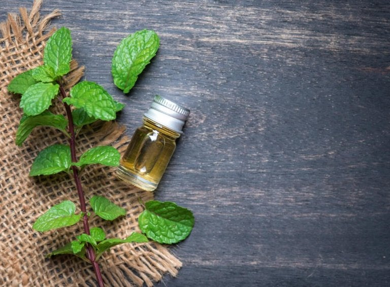 The Benefits of Mint Oil for Your Body