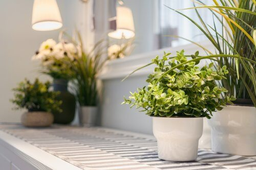 9 Tips for Caring for Indoor Plants