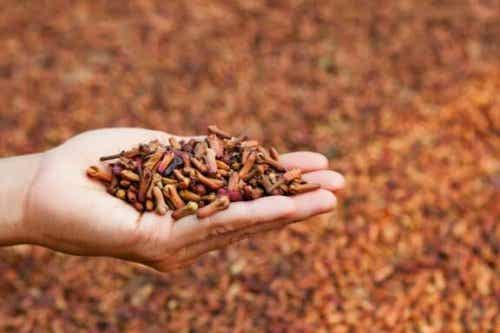 5 Medicinal Uses of Cloves to Improve Health