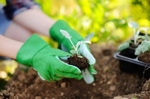 Things to Keep in Mind When Replanting Plants
