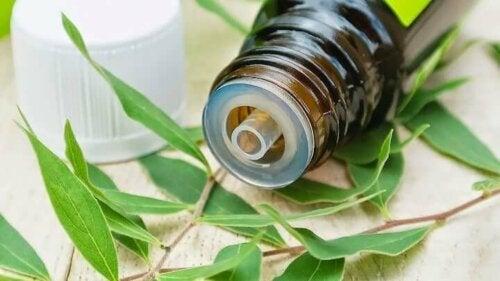 A bottle of tea tree oil.