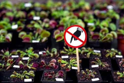 Seven Dangerous Plants You Shouldn't Have at Home