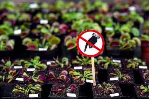 Seven Dangerous Plants You Shouldn't Have at Home