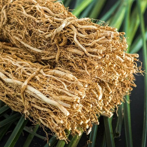 A bundle of dried vetiver.