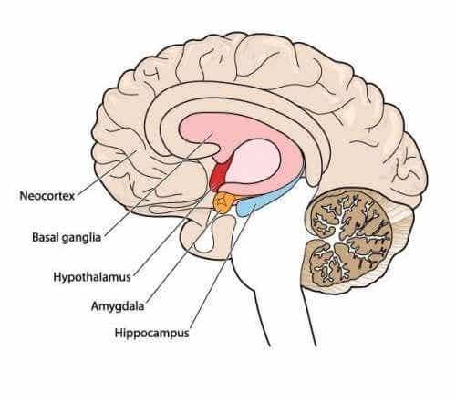 Movement Disorders: Meet Athetosis