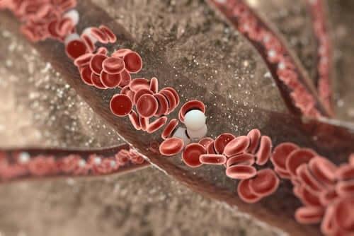 Blood vessels.