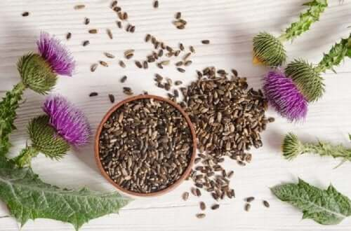 One of the most popular remedies for the liver and gallbladder is milk thistle .