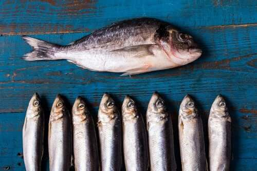 Eat Oily fish if you suffered a heart attack