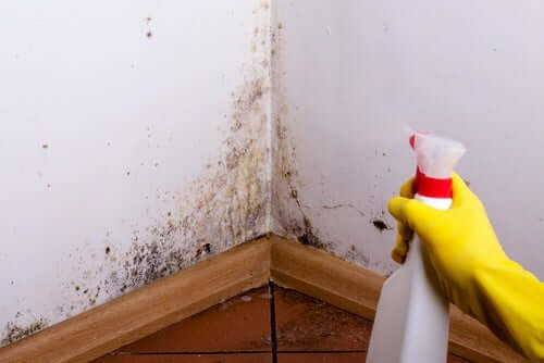 A person removing mold from walls.