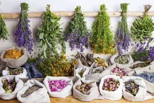 What Are the Benefits of Phytotherapy?