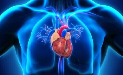 Location of heart in the body parts of the heart