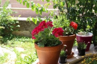 Summer Flowers: Six Options for Your Garden