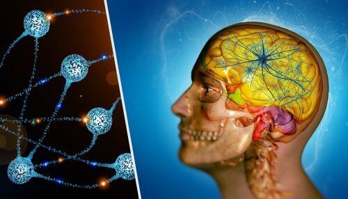 A double illustration of a head and neurons.