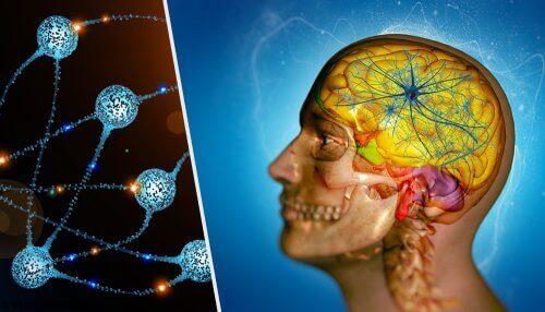 En dubbel illustration av ett huvud och neuroner.