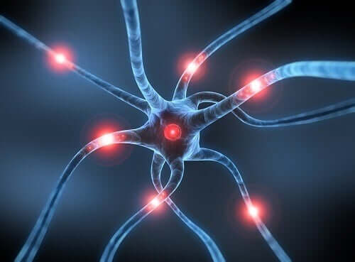 Parkinson's disease neurons.