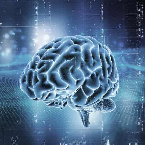 The Brain's Reward System: How Does it Work?