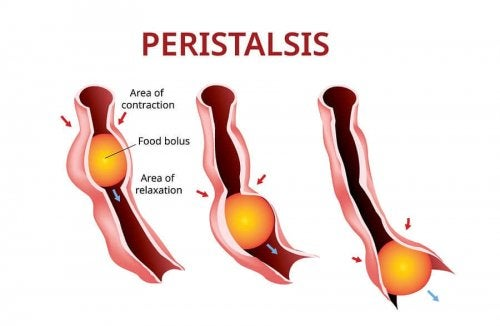 A representation of peristalsis.