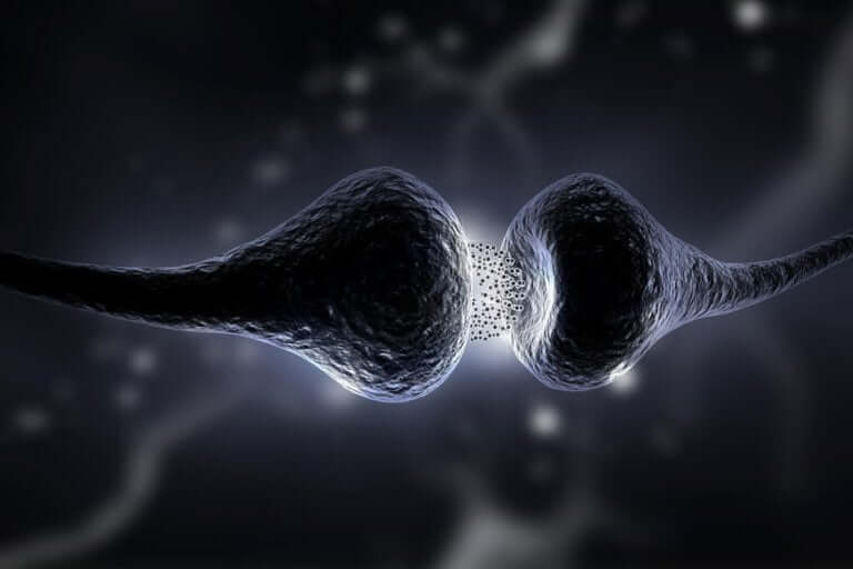 Synapses are the physical space where neuroplasticity in the brain takes place.