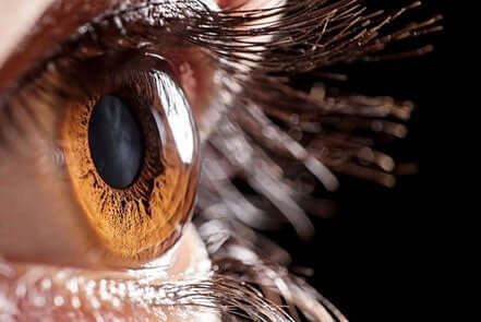 Closeup of a cornea.