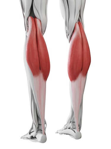 A diagram of calf muscles.