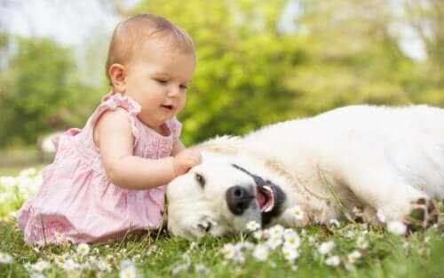 A baby petting a dog.