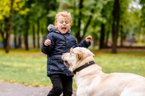 My Child is Scared of Animals. What Should I Do?