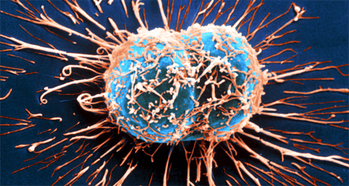 How the Immune System Fights Cancer
