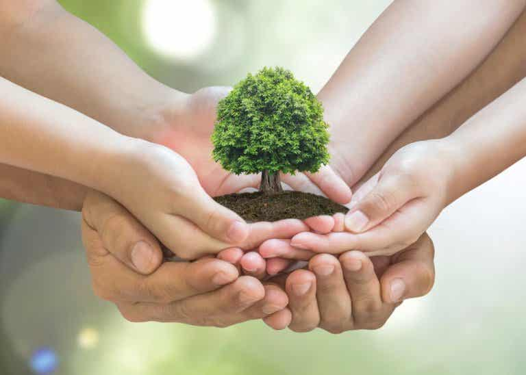 10 Tips to Take Care of the Environment at Home
