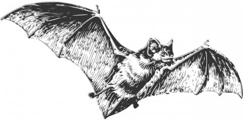 Bats Are the Cause Behind Coronavirus
