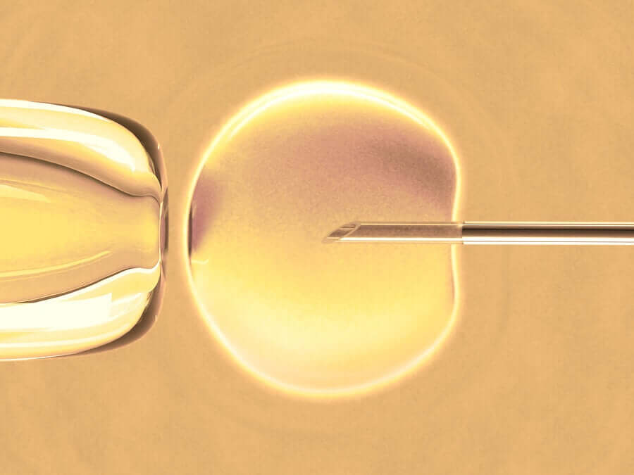 What Is In Vitro Fertilization?