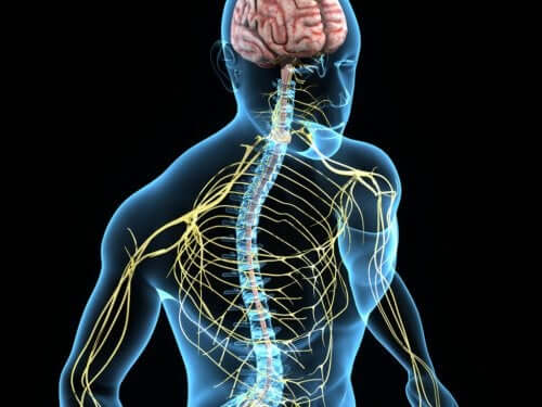 The nervous system is affected by Horner's syndrome.