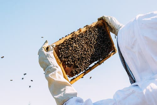 A beekeeper with his bees.