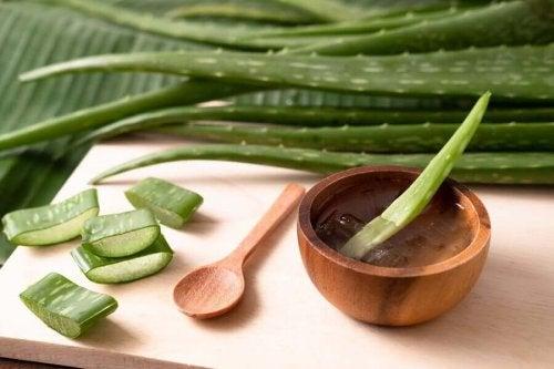 Aloe vera leaves and segments.