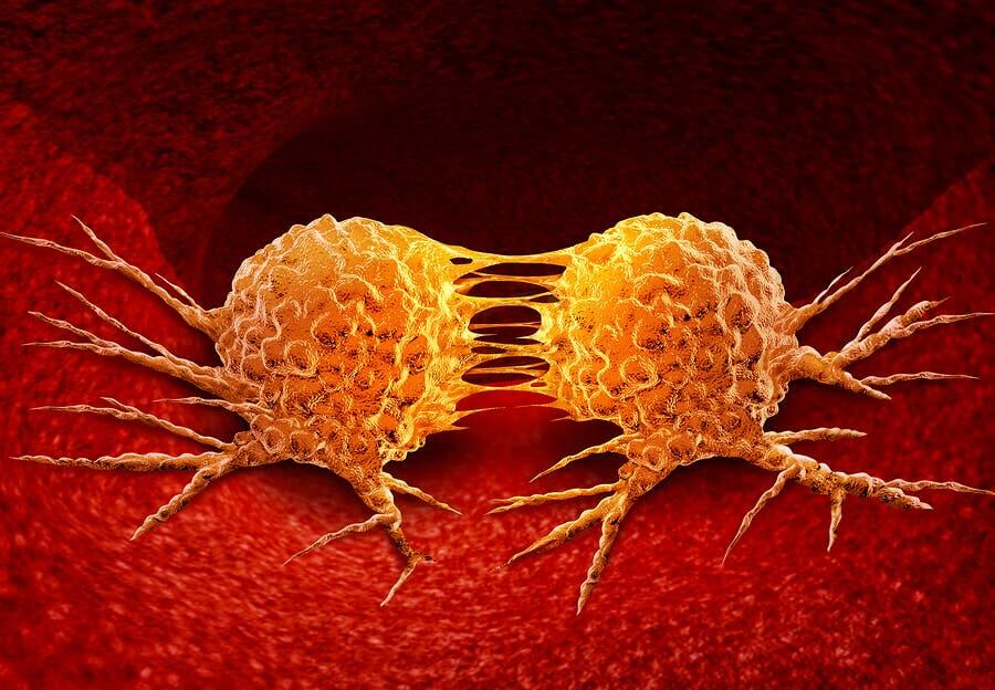 The reproduction of cancerous cells.