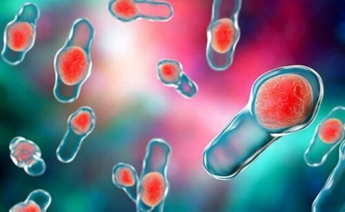 Clostridium difficile bacteria.