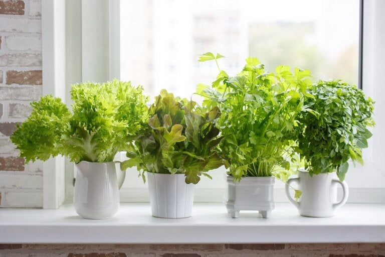 How to Plant Different Culinary Plants