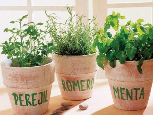 Different culinary plants in pots.