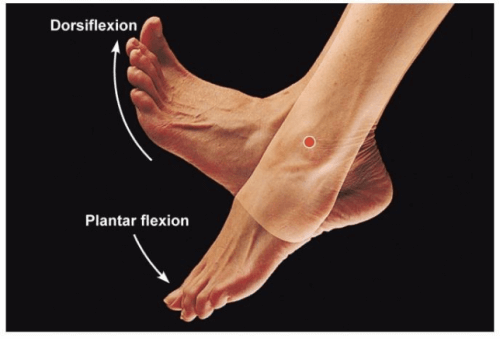 Dorsiflexion and plantar flexion.