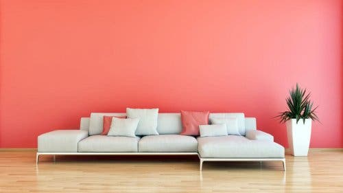 Room with pink wall and pink pillows on couch.