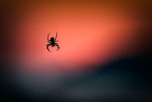The Venom of a Spider May Help Reduce Brain Damage