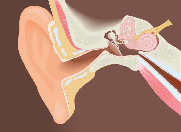 Surgical Removal of Exostoses of the External Auditory Canal